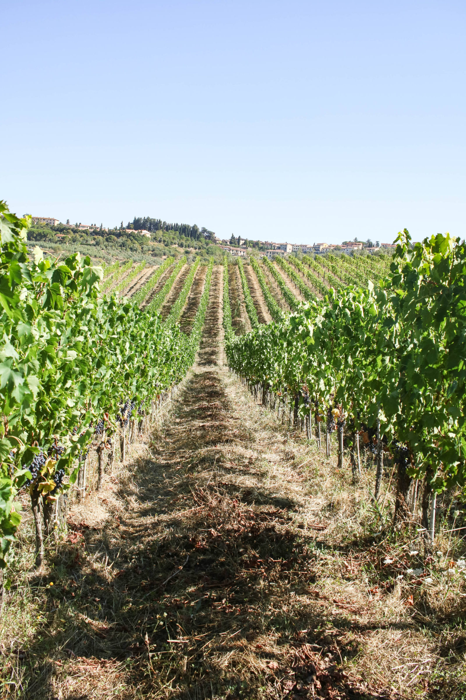 Chianti Wine Tour Photo Diary